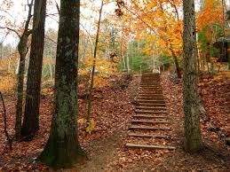 Fall Image 2