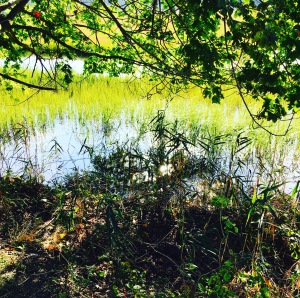 marsh-trail5