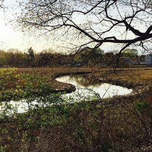 tidal-marsh-with-creek
