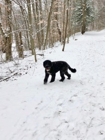 Splash on trail in winter